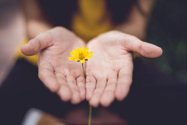 Buttercup held in hands